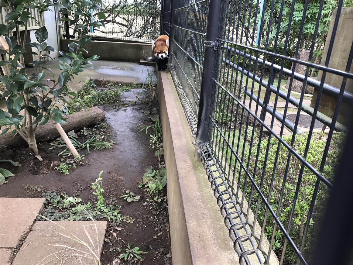 ichikawa-zoo1-25