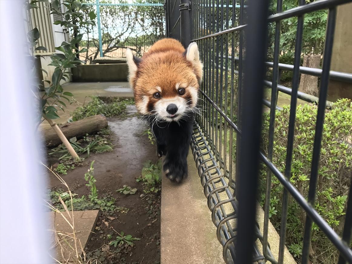 ichikawa-zoo1-27