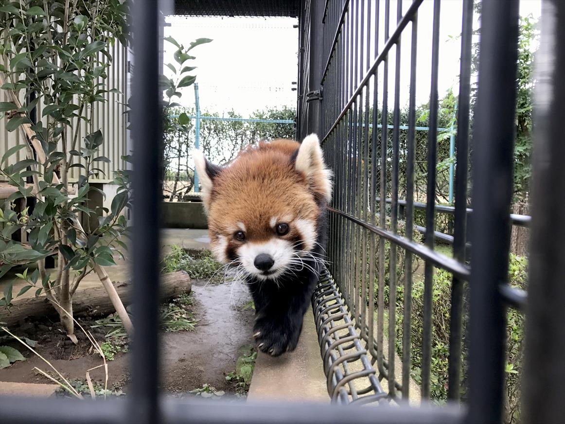 ichikawa-zoo1-28