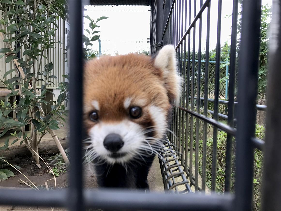 ichikawa-zoo1-30