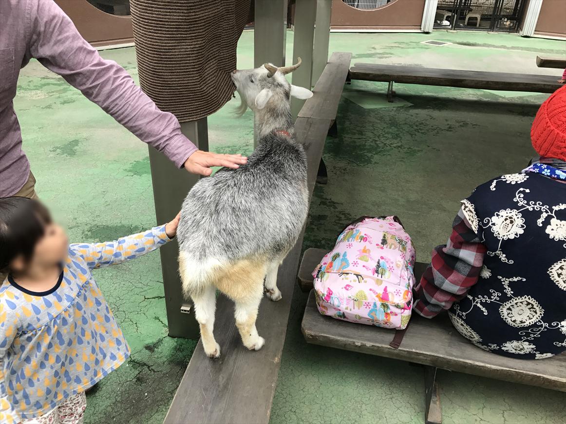 ichikawa-zoo1-9