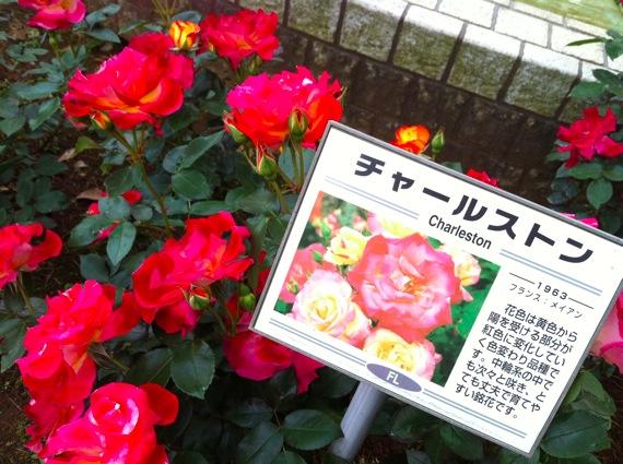 Satomikouen1 8
