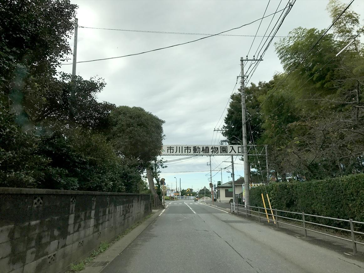 ichikawa-zoo1-1