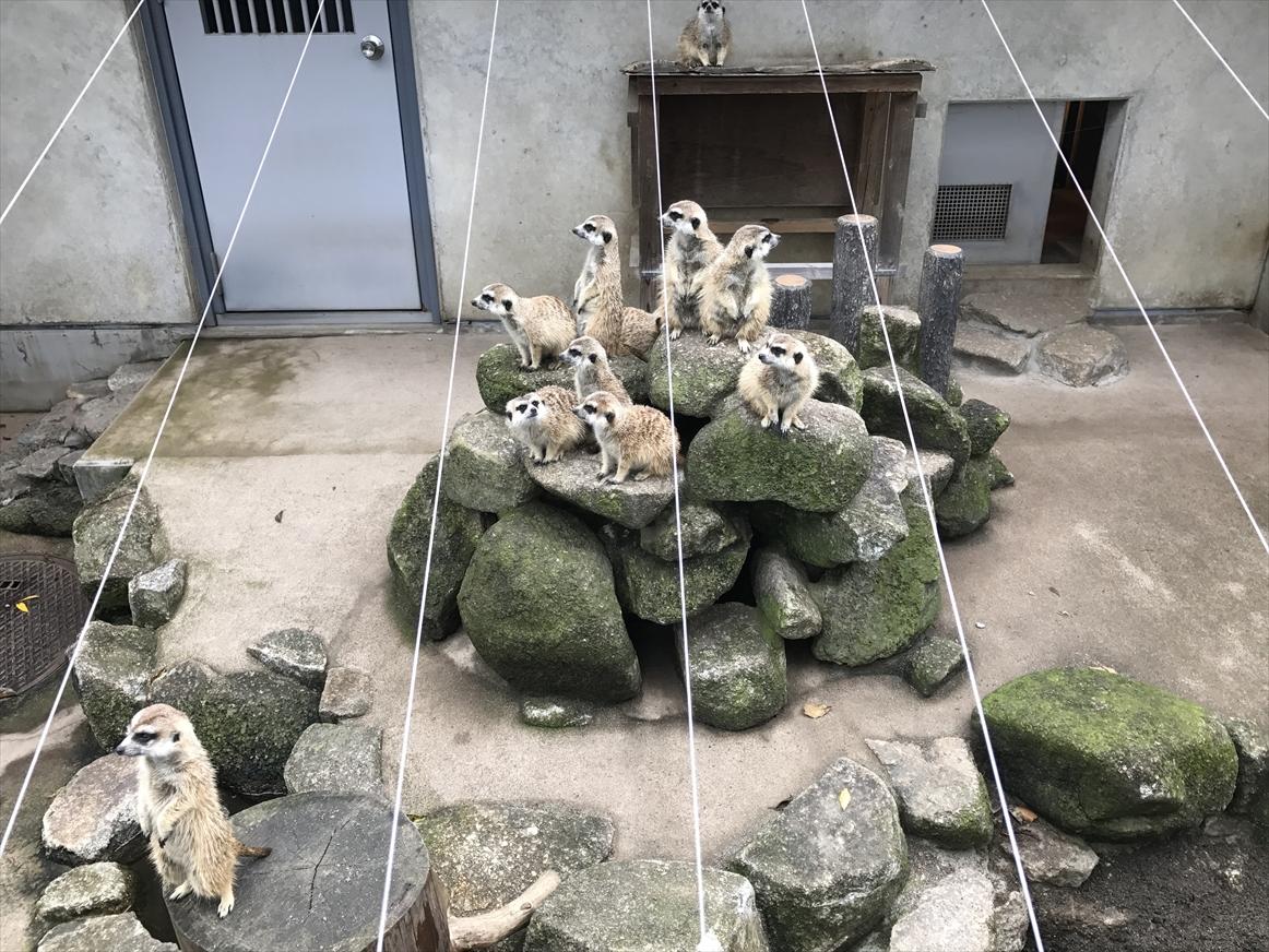 ichikawa-zoo1-24