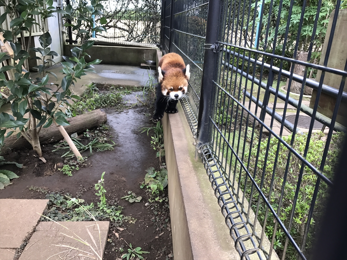 ichikawa-zoo1-26
