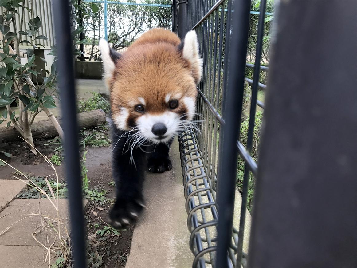 ichikawa-zoo1-29