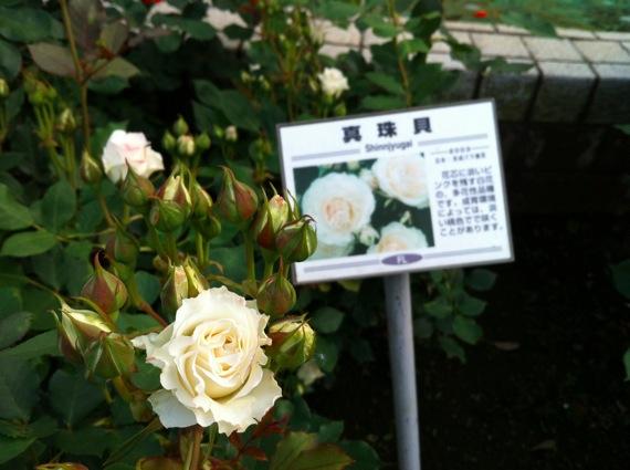 Satomikouen1 17