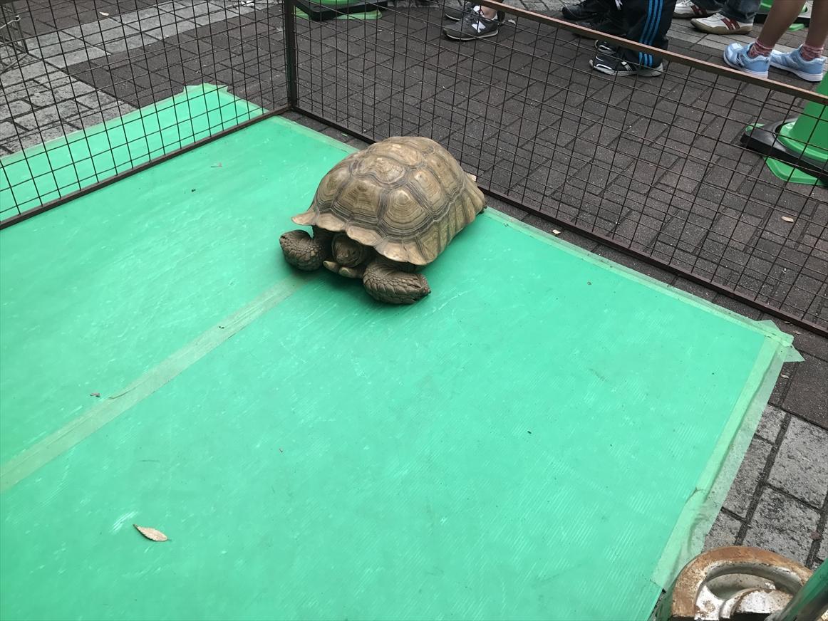 zoo1-11